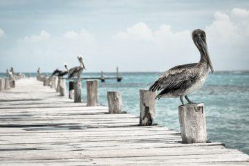 ציפורים ועופות